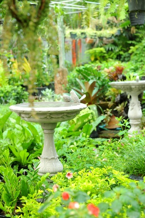 back yard pond: Beautiful classical garden Stock Photo