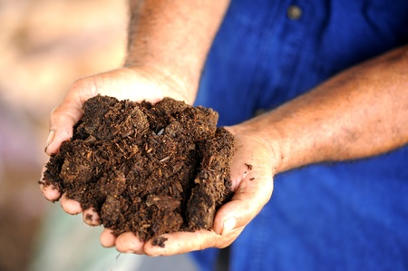 humus: hands with soil Stock Photo