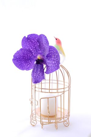 Bird with cage and pretty Stock Photo