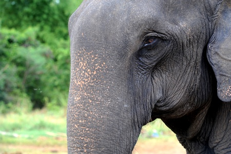 tough luck: elephant close up Stock Photo