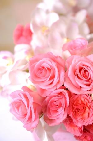 Closeup of pink rose Stock Photo - 10739832