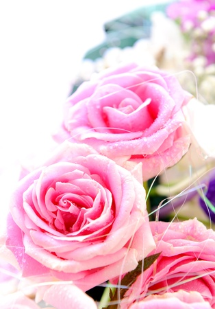 Beautiful Roses Border photo