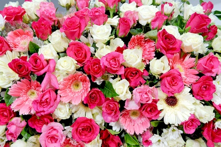 colorful blooms Stock Photo - 10912775