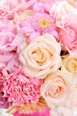 Beautiful blooming pink flowers photo
