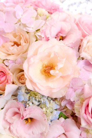 flower set Stock Photo - 10913177