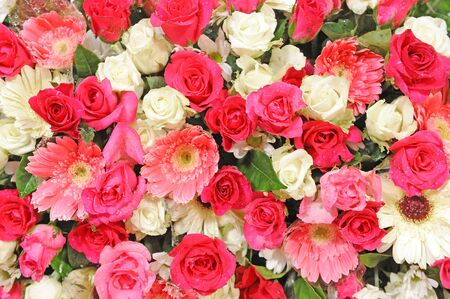 Roses Background photo