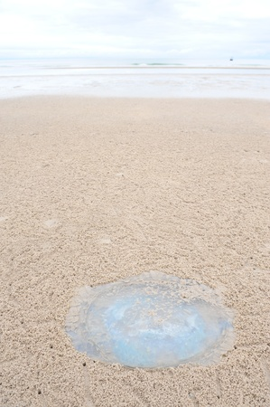 Jellyfish on sand photo