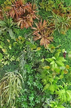 top view of garden photo