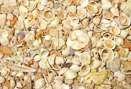 sea shells background photo