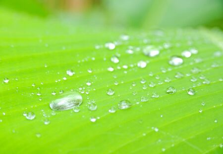 closeup of green leaf with water drops photo