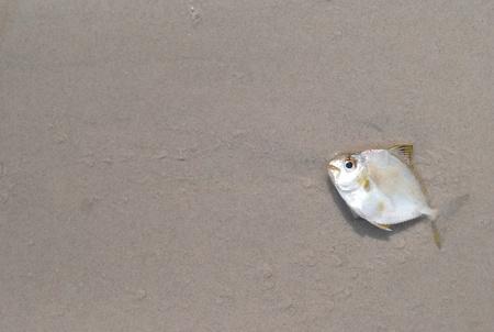 Dead fish photo