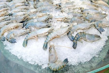 Fresh Shrimp photo