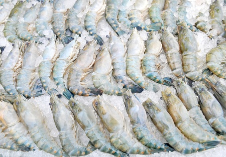 fresh shrimp on ice photo