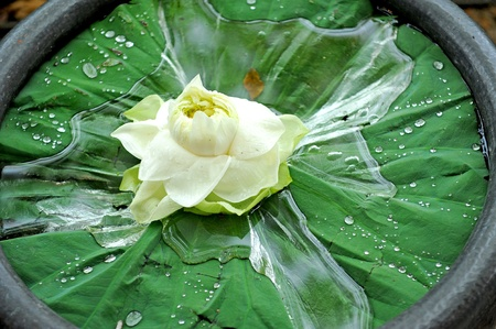 spa still life with lotus photo
