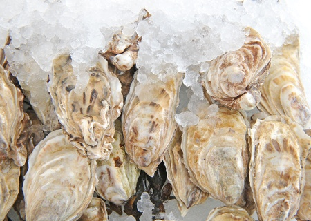 raw oysters with lemon Stock Photo - 13552167