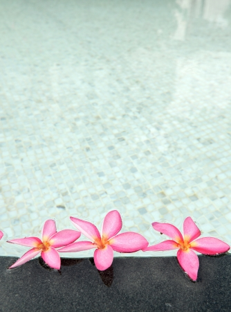 flower in spa photo