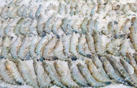 Fresh prawn Stock Photo - 13758474