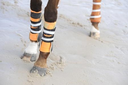 girth: legs of the horse