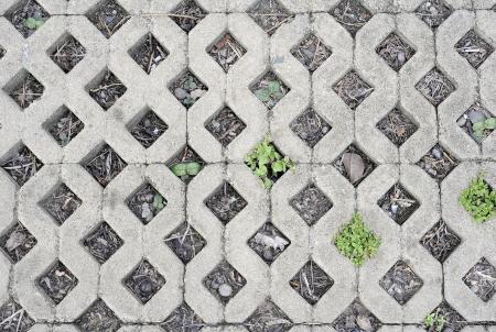 Plant little tree on old bricks  photo
