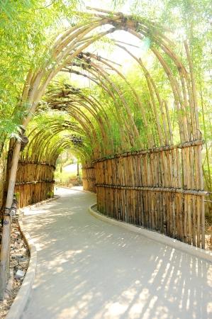 Bamboo way photo