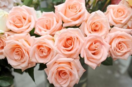 bloem rozen