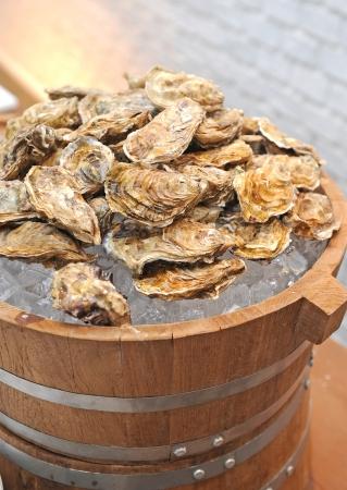 fresh raw oysters Foto de archivo