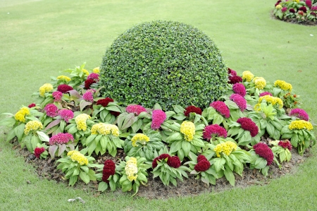 garden marigold: flower garden