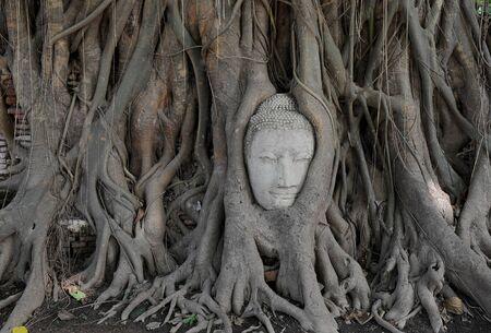 Buddha statue in tree photo
