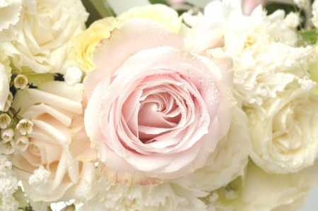Roses Foto de archivo
