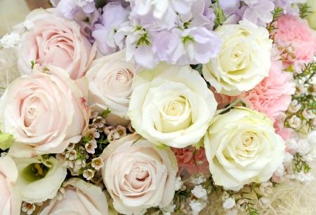 Beautiful rose Stock Photo - 19986866