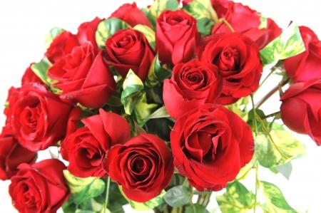 Beautiful roses Stock Photo - 19986859