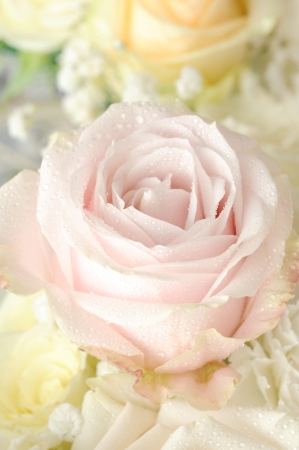 pink rose macro Stock Photo - 20146774