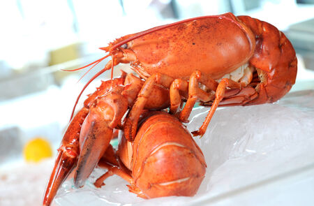 lobster in closeup shot  photo