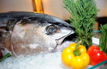 bluefish: tuna for sushi