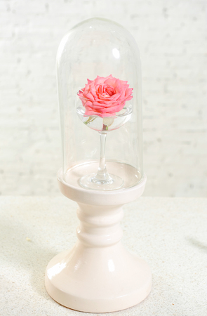 Beautiful glass with pink rose Stock Photo