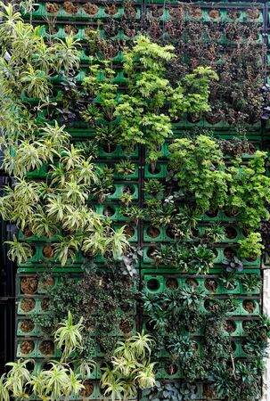 Variety of plants in vertical garden