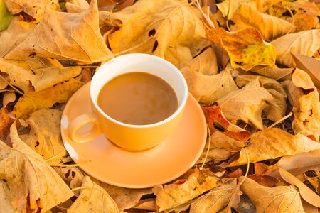 Coffee cup and autumn leaves