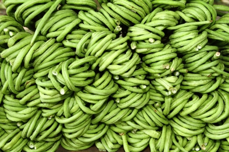 Yard long bean used to feed animals Stock Photo - 21924676