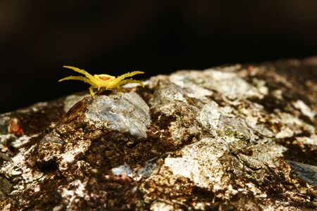 Macro of yellow crab spider