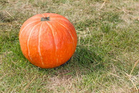 japanese pumpkins on Dry grass and grass green Stock Photo