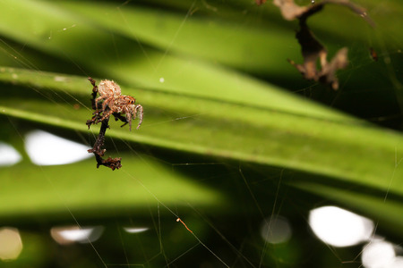 The Jumping spiders  on fiber