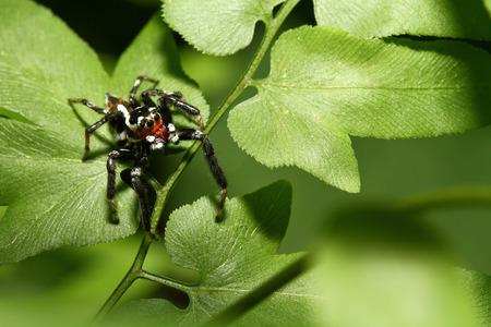 Spiders jump on green leaves Stok Fotoğraf