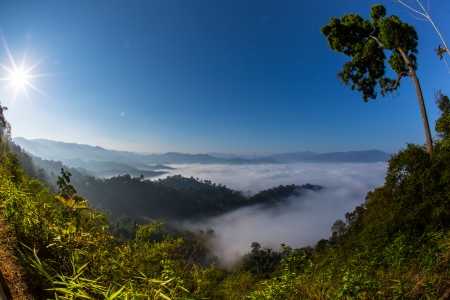 The sea of fog with forests as foreground  This place is in the Kaeng Krachan national park, Thailand