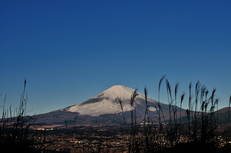 the pampas: Japanese pampas grass and Mount Fuji where snow lay