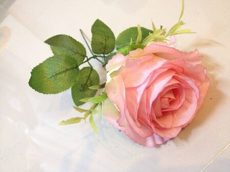 eye: The rose for you