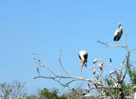 ardeidae: bird sits on tree crown