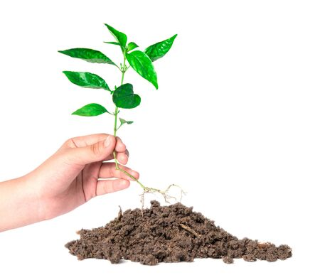 planted: planted a tree