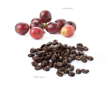 coffee berry: coffee berry and coffee beans isolated on white Stock Photo