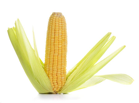 peeled fresh sweet corn isolated on white 版權商用圖片