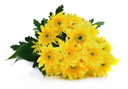 barberton daisy: yellow gerbera flowers on white background